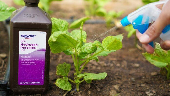 hydrogen peroxide for plants